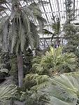 Inside Temperate House