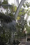 Arch in the Palm House